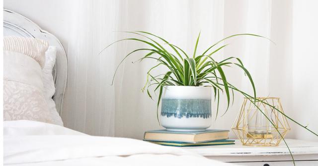 tanaman di bilik tidur